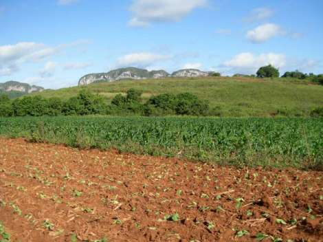 coltivazione del tabacco, Viñales