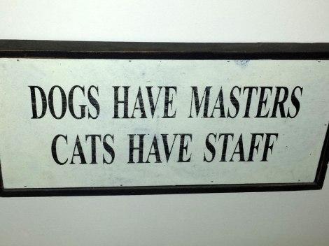catsHaveStaff